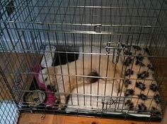Crate Training Puppy Tips