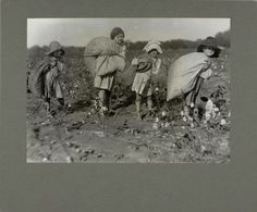 Children picking cotton, 1915. What Newt will have our kids doing on the moon