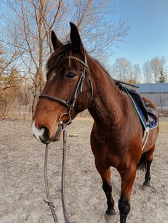 Bay Horse, Horse Horse, Horses, English Riding, Show Jumping, Equestrian, Handsome, Goals, Classic