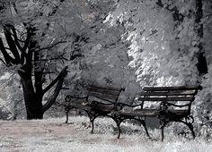 Two benches... Petrovaradin fortress, Novi Sad, Serbia
