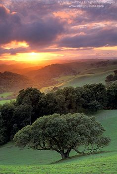 ~~Briones Sunset ~ sunset light through clouds over oak tree and green hills in spring, Briones Regional Park, Contra Costa County, California by enlightphoto~~