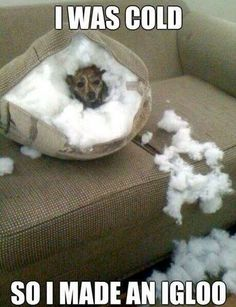 #funny #cute #quotes #quote #igloo #cold #inside #outside #snow #couch #tear #up #dog #animals #sayings #saying #brown #made #created #tore #up #fluff #cotton #pillow