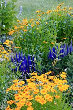 Gardeners are Wonderful People | Fine Gardening Coreopsis and veronica