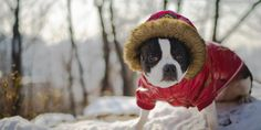 How To Survive Winter With Your Dog (VIDEO)