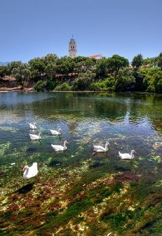 Karavomilos lake, Kefalonia Island Destin Beach, Corfu, Big Island, Greece Travel, Beach Fun, Greek Islands, Athens, Places To See, Cool Photos