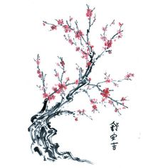 Chinese Tree Pink Blossom Graphic and Chinese Tree Pink Blossom Image ❤ liked on Polyvore featuring backgrounds, flowers, fillers, drawings and effects