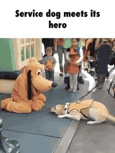 Service dog meets its hero GIF