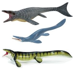 Different types of Mosasaur models.