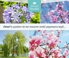 EVvel İstanbul'da sizleri, yol boyunca uzanan her dem yeşil manolyalarla birlikte ağaçlı yollar karşılayacak. http://www.evvelistanbul.com/