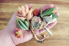 Propogating succulents | Flickr – Compartilhamento de fotos!