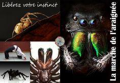 Libérez votre instinct : la marche de l'araignée !