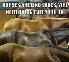 Every Color Funny Horse Memes, Funny Horses, Cute Horses, Pretty Horses, Horse Love, Beautiful Horses, Funny Humor, Horse Humor, Horse Girl