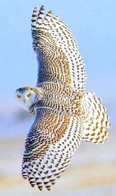 Exotic Birds, Colorful Birds, Beautiful Owl, Animals Beautiful, Majestic Animals, Beautiful Patterns, Photo Animaliere, Owl Pictures, Owl Photos