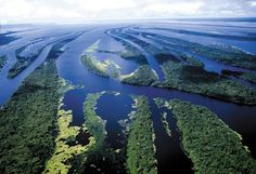 Arquipélago das Anavilhanas Rio Negro - Amazonas