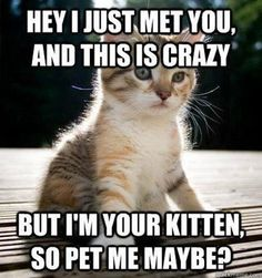 call me maybe meme- Smosh Funniest Cat Memes, Funny Cat Memes, Cats Humor, Pet Memes, Animal Memes, Funny Animals, Cute Animals, Crazy Animals, Animal Humor