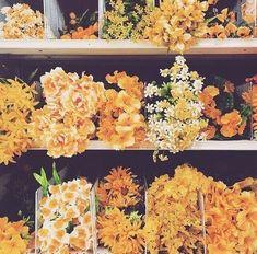 ideas for wallpaper paisagem laranja Orange Aesthetic, Aesthetic Colors, Flower Aesthetic, Flower Yellow, Yellow Roses, Yellow Walls, Happy Colors, Mellow Yellow, Pretty Flowers