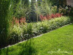 Ogrodowy powrót do dzieciństwa. - strona 743 - Forum ogrodnicze - Ogrodowisko