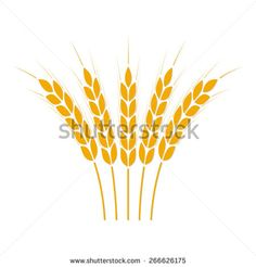 Wheat ears or rice icon. Crop symbol isolated on white background. Design element for bread packaging or beer label. Vector illustration. - stock vector