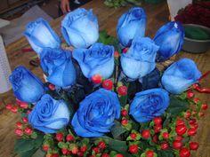 Nuestra Martes inicia con el azul de nuestras Rosas. ¿Que tal el suyo? bendiciones amigos.