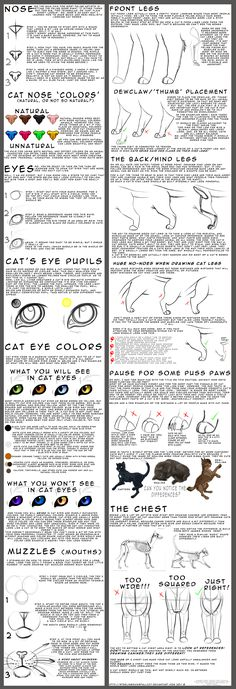For beginner feline artists by *NinjaKato on deviantART