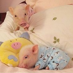 Prissy Pig Instagram Roundup - Cute Piglets