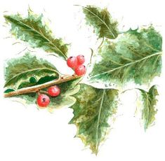 Impressionistic holly painted with washes of values - this gives a lively and fresh look, to Christmas paintings, rather than perfectly outlined leaves.