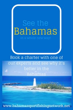 Your resource for all things Bahamas fishing, snorkeling and other water sports adventure. Book your next charter with one of our BSFN certified experts, get your gear from shirts to lures and head out for a day you will never forget. Sport Fishing, Going Fishing, Best Fishing, Compleat Angler, Swimming Pigs, Exuma Bahamas, Cliff Diving, New Travel, Travel Tips