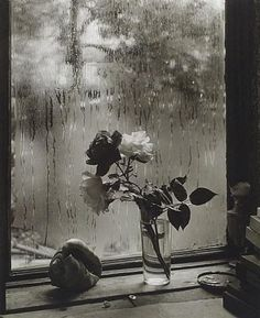 Josef Sudek. The Last Rose of Summer.