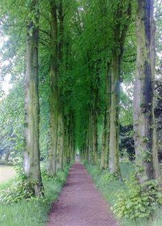Lady Lucy's Walk at Wentworth Castle, South Yorkshire....