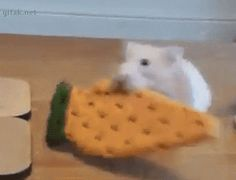 Gifak.net. gifak-net. Gifs. Animated gif. Lol gifs. Funny gifs. Cat gifs. New…