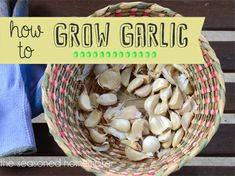 Don't miss out on fresh garlic -- simply grow it in a container.