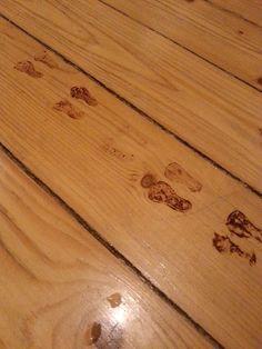 elfs foot print