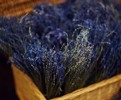 Where To Plant Lavender