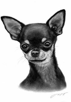 this Chihuahua look like one of my dogs her name is dasiy