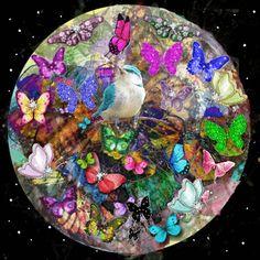 Beautiful butterflies and blue bird. ..