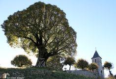 Accroché sur les contreforts du Bugey, le petit village d'Innimond offre à ses habitants un cadre de vie exceptionnel. Une nature préservée, loin des vallées urbanisées et une vue qui se perd à l'h…