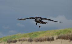 Birds In Flight, Bald Eagle, Explore, Animals, Animales, Flying Birds, Animaux, Exploring, Animal