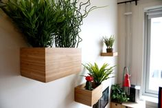Dragan as a plant pot on the wall? Yes, with velcro. Maybe I should try something similar!