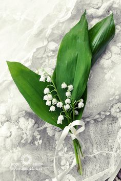 10-29-2016 Lily of the Valley bouquet on lace, tied with white ribbon.