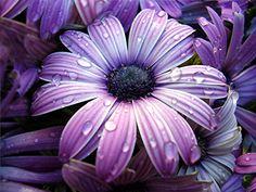 eu quero flores por todos os lados..