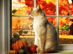 Kot, W Oknie, Dynie, Jesienny, Ogród