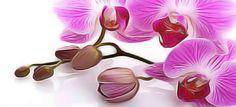 Orchidées : Comment les faire refleurir ? Astuces et conseils pour avoir de belles orchidées. Exposition, arrosage, techniques de coupe… Les astuces de grand-mère.