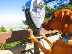 A dog's eye view.