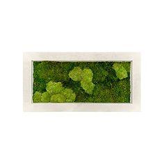 Zelené stěny - Mechový obraz natural 100x50cm 30%ball+70%flat mechu