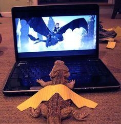 free pictures funny lizards | Lizard Dreaming – How to Train Your Bearded Dragon | LatinRapper.com ...
