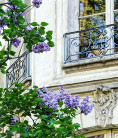 """Tamra Lea Design on Instagram: """"Lilacs!!! Oh this beautiful Paris scene thrills my soul, I love every beautiful detail.   @clangart 💕  . . . . . . #frenchcountrypassion…"""" Paris Tumblr, Beautiful Paris, Pink Poppies, French Countryside, Balcony Garden, Wonders Of The World, Bloom, Outdoor Structures, Antiques"""