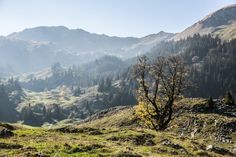 Breccaschlund - Wanderung in der Urlandschaft Schwarzsee Mountains, Nature, Travel, Photos, Freiburg, Hiking, Places To Travel, Landscape, Vacation