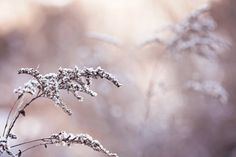 Winter Photography nature neutral beige pale faded light purple for her frost ice cold tan brown under 25 romantic decor - Fine Art Print via Etsy