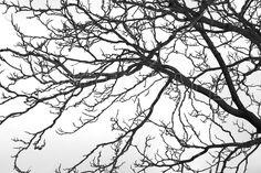 Black and White Tree - Tapetit / tapetti - Photowall