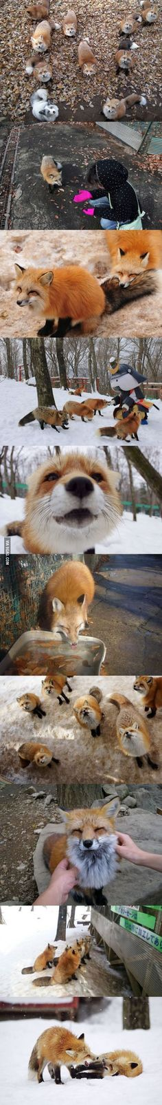 Fox Village in Japan. This is in the mountains near Shiroishi.